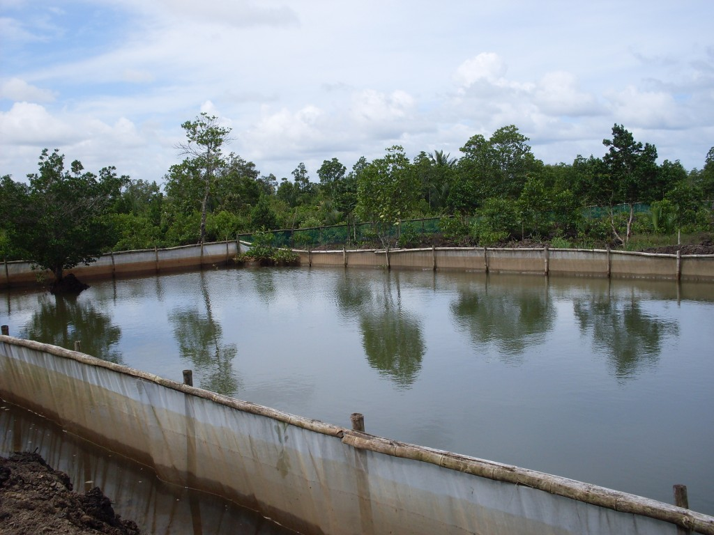 West bengal subsidy for renovation of existing fish ponds for Koi pond india